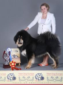 skar-tibetan-mastiff