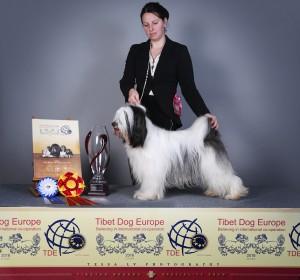 skar-tibetan-terrier